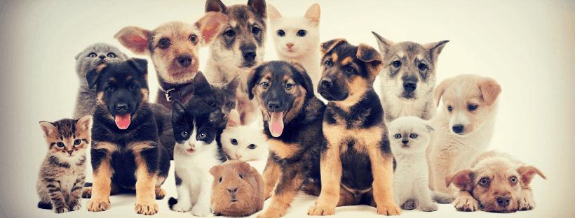 Pet Blessing 2020