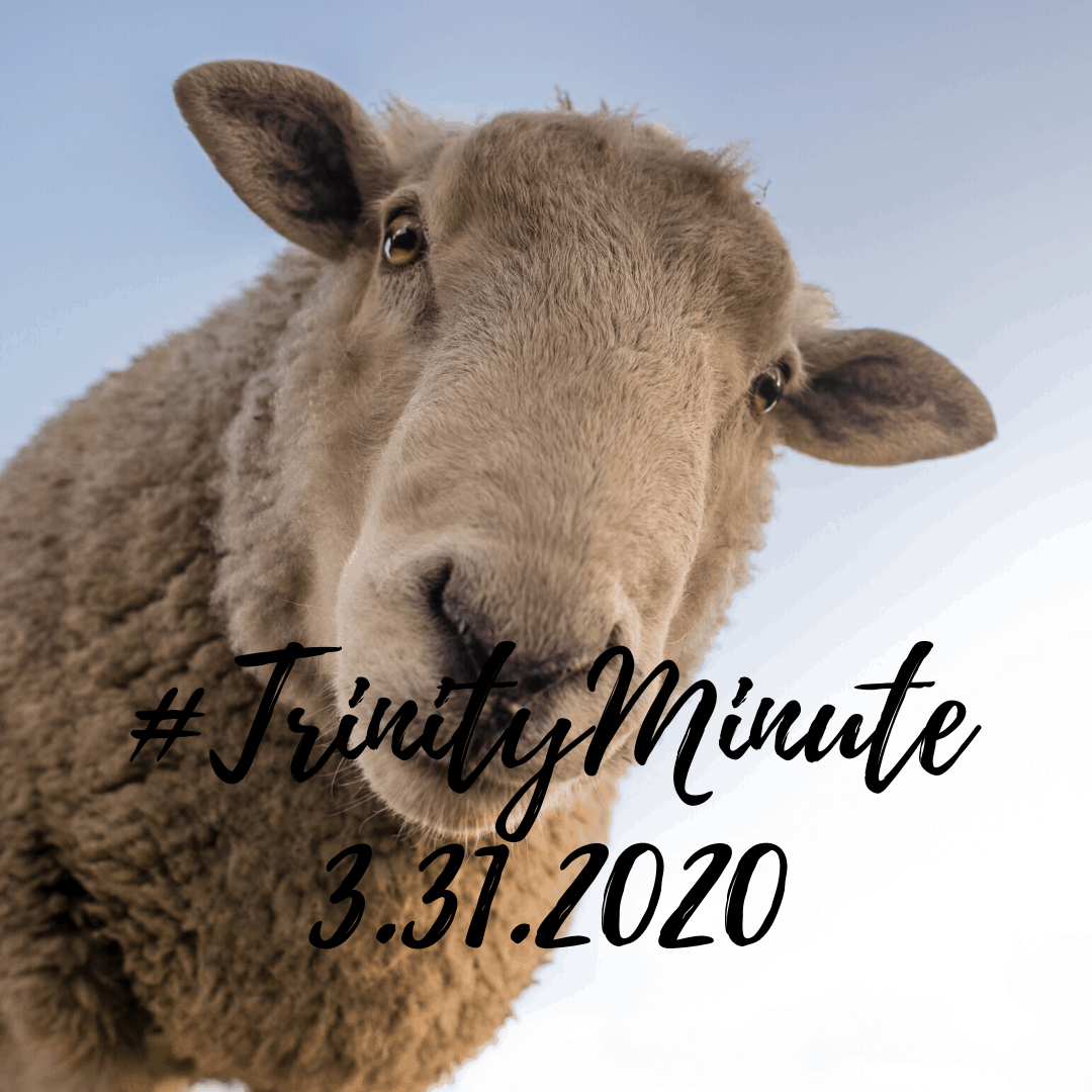 #TrinityMinute 3.31.2020